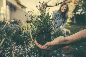 Gardening: Annuals and Perennials