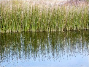Creating a Living Shoreline in Maryland